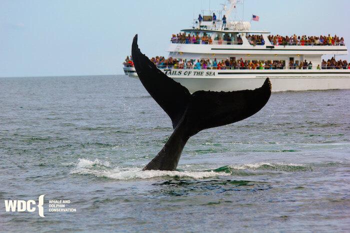 Whale Watch, Captain John Boats, Plymouth, Mass.